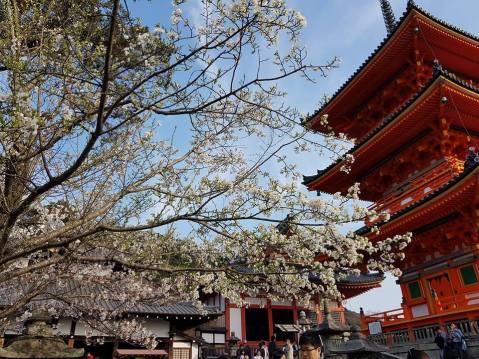 Kiyomizu-dera3