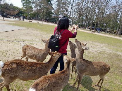 Nara Deer2